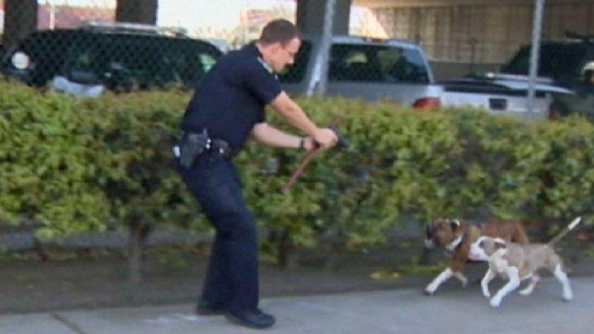 policia-dispara-pitbbull