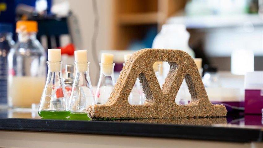 Estos ladrillos no solo están vivos, sino que también se reproducen, pues al partir uno por la mitad las bacterias pueden crecer hasta convertirse en dos ladrillos completos si se les proporciona un poco arena, hidrogel y nutrientes.