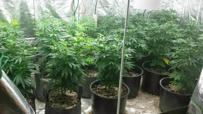 tlmd_vermont_marihuana_casa_incendio