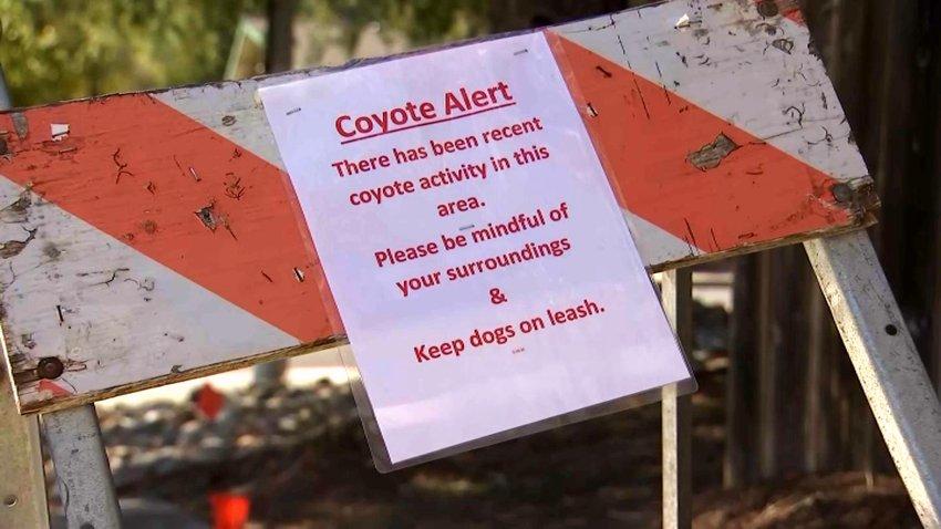 A coyote alert sign in Lamorinda.