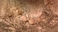 cenizas-ceramica-1