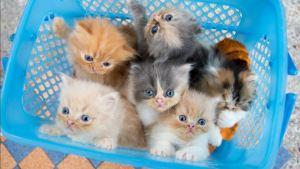 Día del Gato: 4 mitos y 4 beneficios de tenerlos