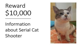 Buscan a sospechoso de dispararle a varios gatos en Oakland