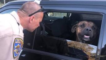 Rescata a perro abandonado en carretera al norte de CA