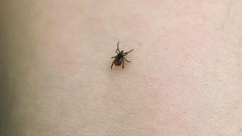 Cómo protegerse de mosquitos y garrapatas