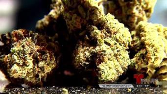 Riesgos de la marihuana y tu estado migratorio