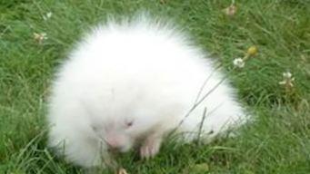 Misteriosa criatura blanca aparece en museo y le buscan nombre