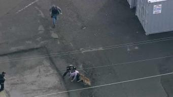 Perro policía ataca a sospechoso durante persecución
