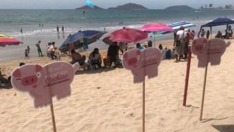 Las playas de Mazatlán se llenan de cochinitos