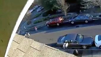 Niña vuela por el aire tras ser arrollada en Santa Rosa