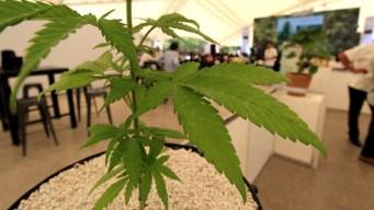 California respalda el envío de marihuana a todo el estado