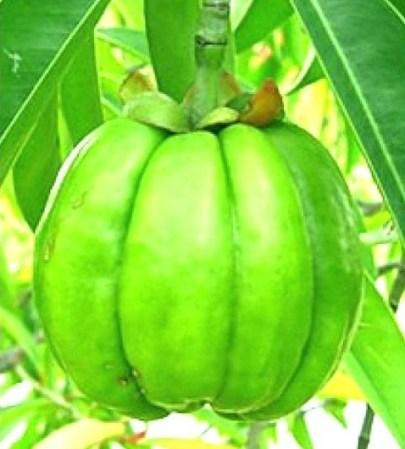 ... suplementos para bajar de peso — Telemundo 48 - Area de la Bahia