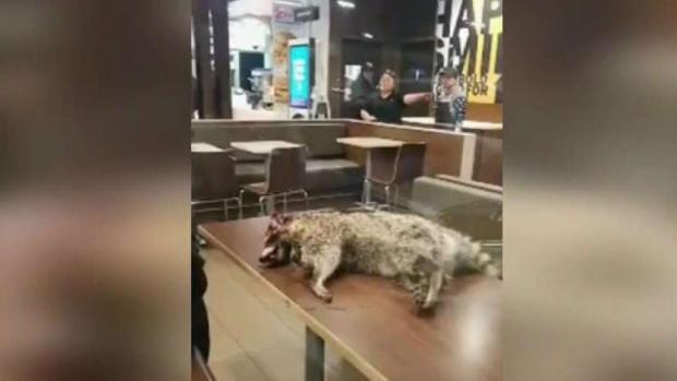 [TLMD - Bahia] Mapache muerto sobre mesa de MacDonald's en SF