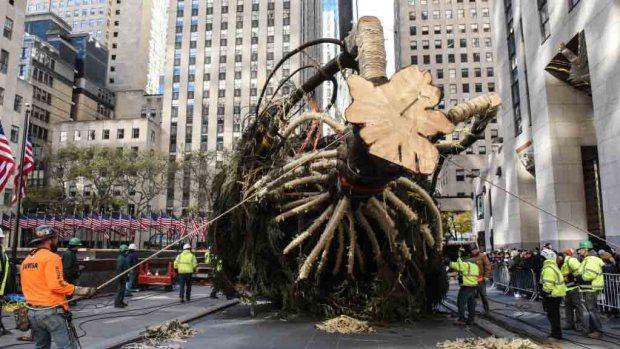 Qué pasará con el árbol del Rockefeller de NY después de navidad