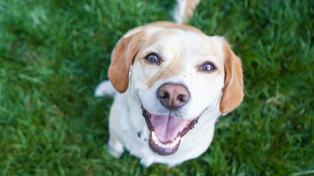 Estudio: ¿Eres buena persona? Tu perro lo puede detectar