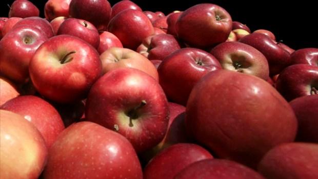 Fotos: 30 alimentos que queman grasa
