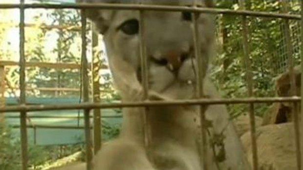 Video: Mujer muere atacada por un puma