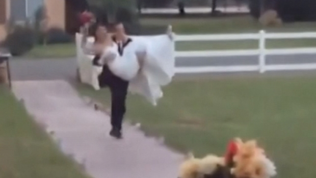 Video: La épica caída de unos recién casados