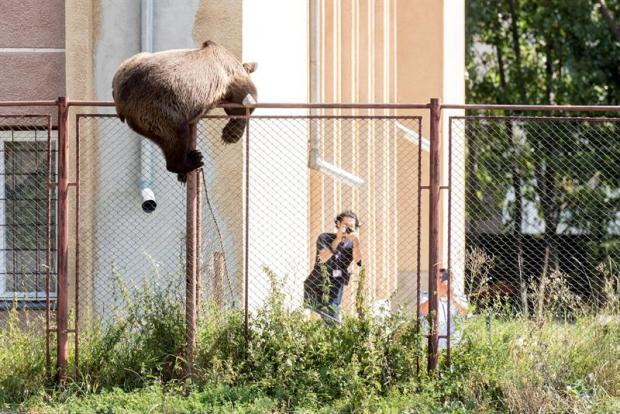 [TLMD - NATL] Espectacular huida de un oso tras matar a una cabra en una casa