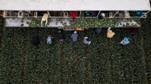 [TLMD - Bahia] Más allá de los campos: Programa fundado por Cesar Chavez ayuda a trabajadores agrícolas sobresalir académicamente