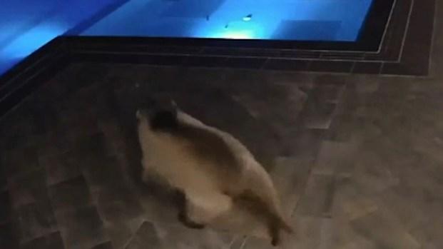[TLMD - LV] Oso se mete en la piscina de un café en Bulgaria