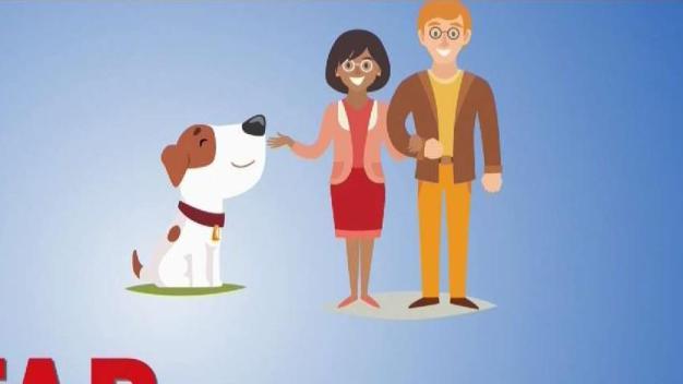 Cómo comprar una mascota en internet
