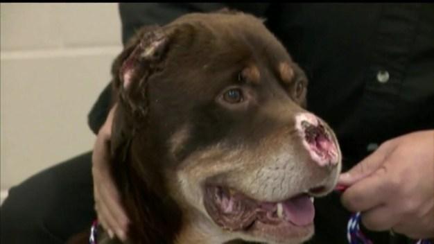 Perro es brutalmente mutilado