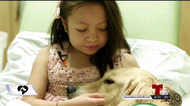Cómo las mascotas mejoran nuestra salud