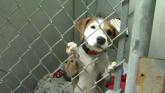 Refugios de animales sobrepoblados en California