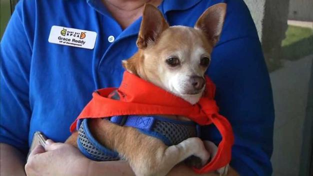 Mas de mil mascotas tienen un nuevo hogar en la Bahía
