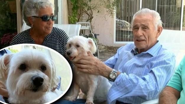 El perrito héroe que salvó a su dueño diabético tras desmayo