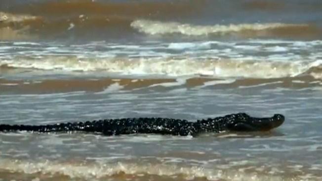 Caimán causa terror en una playa