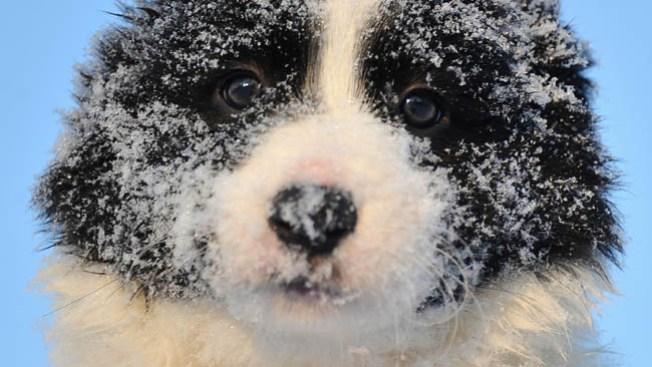 Cuidados para tu perro durante el frío