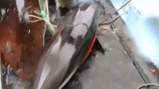 Denuncian masiva matanza de delfines