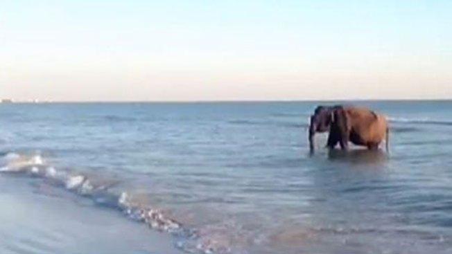 Un tierno bañista en playa de Florida