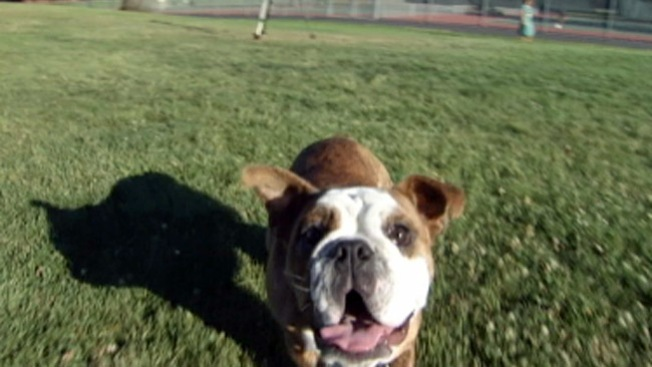 Mountain View: perros podrán pasearse sin correa