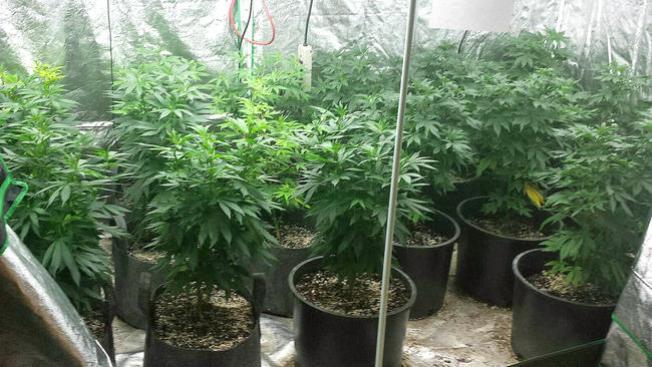 Washington DC: sí a la marihuana