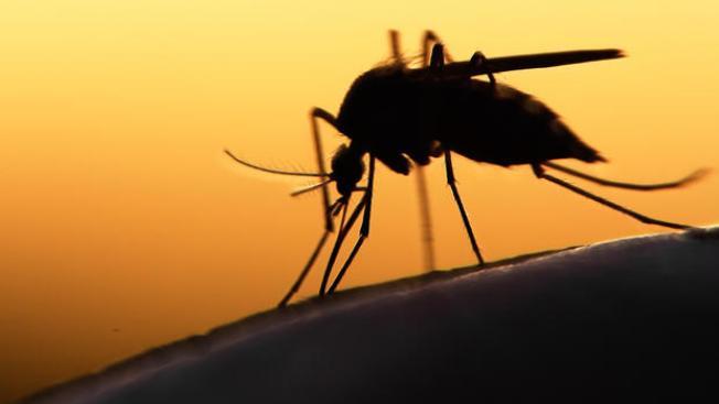 Anuncia Texas primer caso de zika transmitido por mosquitos