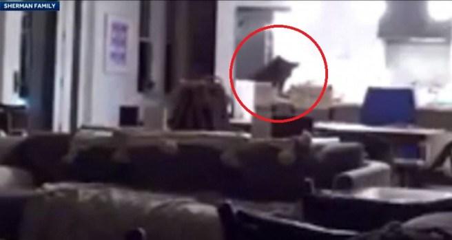 [TLMD - NATL] Oso intruso abre la nevera con gente en casa, mira qué pasó después